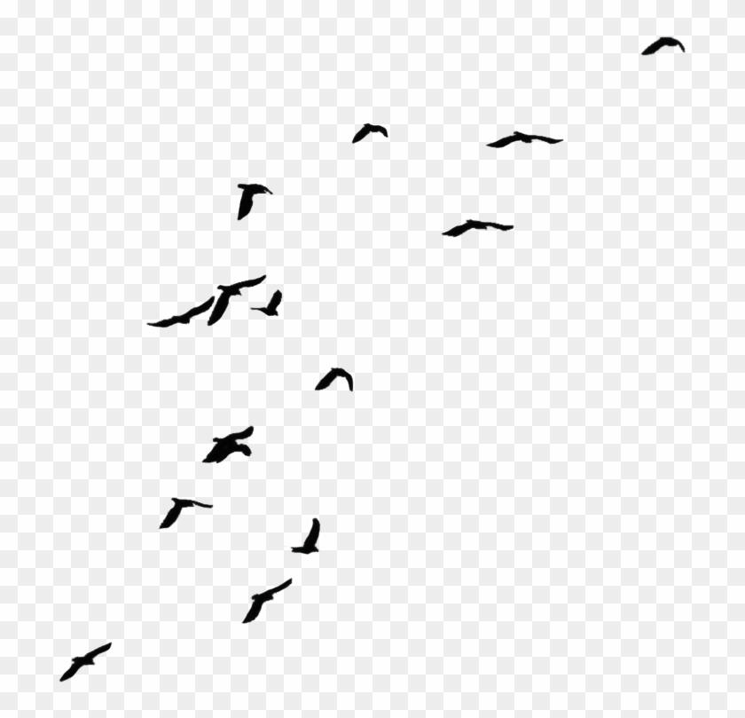 Black Flying Birds By Jassy2012 On Clipart Library - Crows Png #221200
