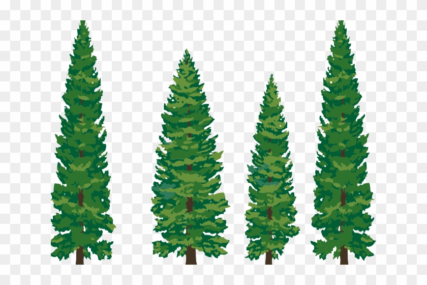 Roots Clipart Pine Tree Watercolor Pine Tree Clip Art Free