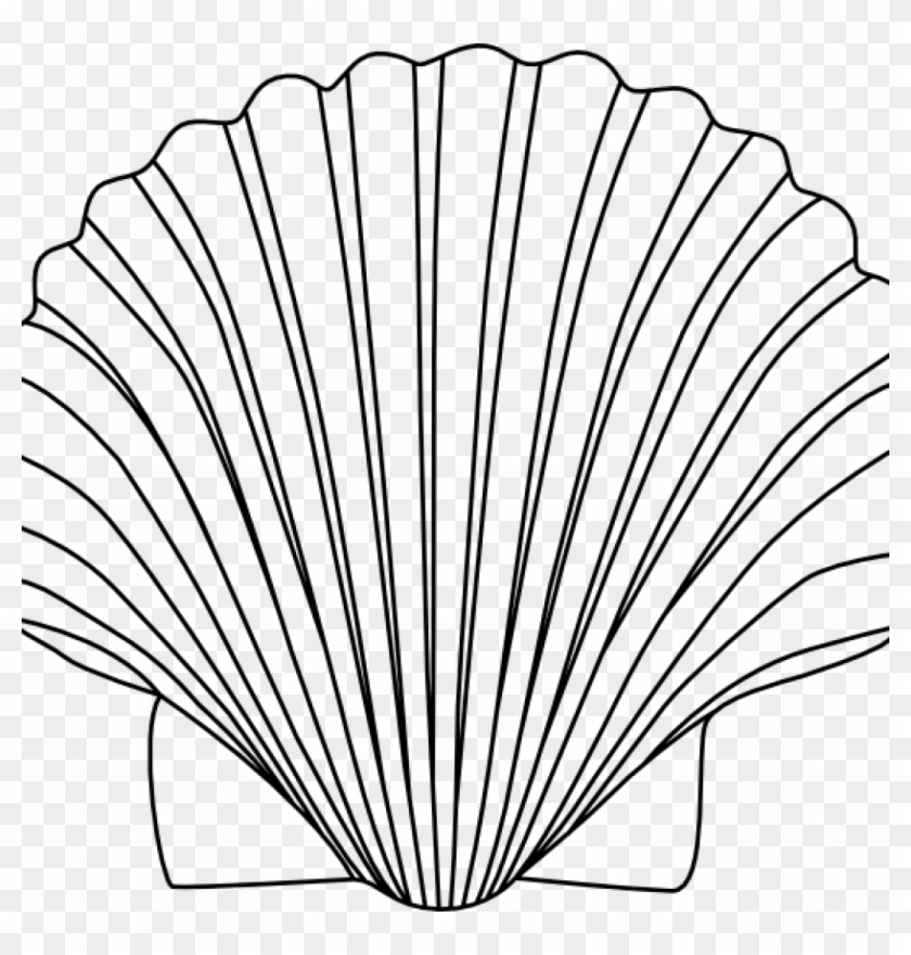 Shell Clipart 15 Shells Clipart Black And White For