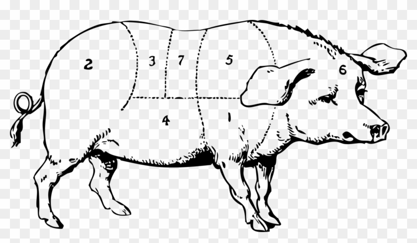 Domestic Pig Pork Chop Ham Pig Roast - Old Major Animal Farm Drawing #1426647