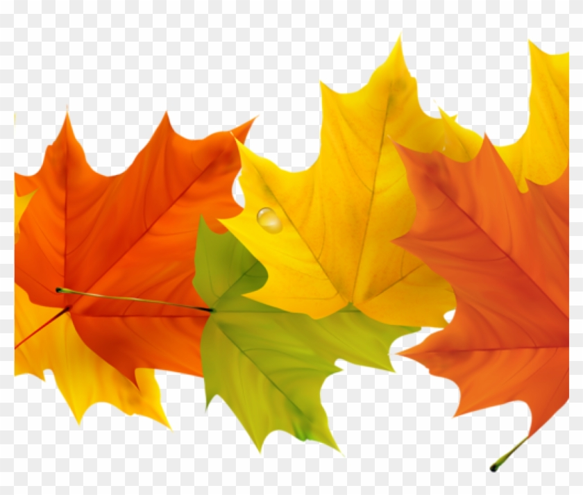 Free Fall Leaf Clip Art 19 Free Graphic Free Fall Leaves - Fall Leaves Border Transparent #1431158