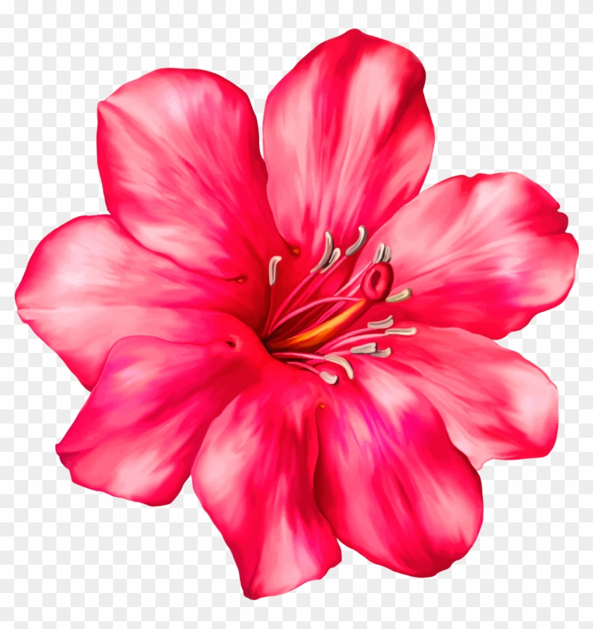 Exotic pink flower png clipart picture tropical flower clip art exotic pink flower png clipart picture tropical flower clip art mightylinksfo