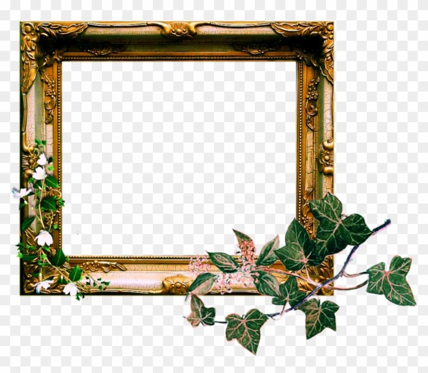 Vintage Ornate Frame Png By Sophia-t - Ivy - Free Transparent PNG ...