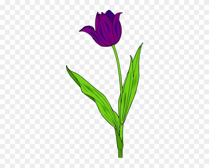 Purple Tulip Clipart #225586