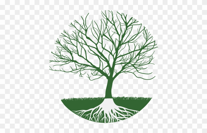 Family Tree Clipart - Realistic Tree Without Leaves #1443623