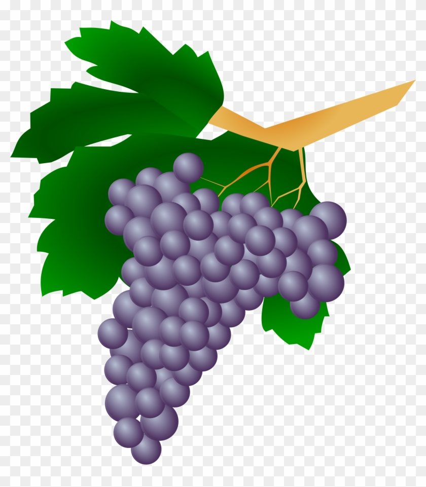 Grape Clip Art Vine Of Grapes Free Transparent Png