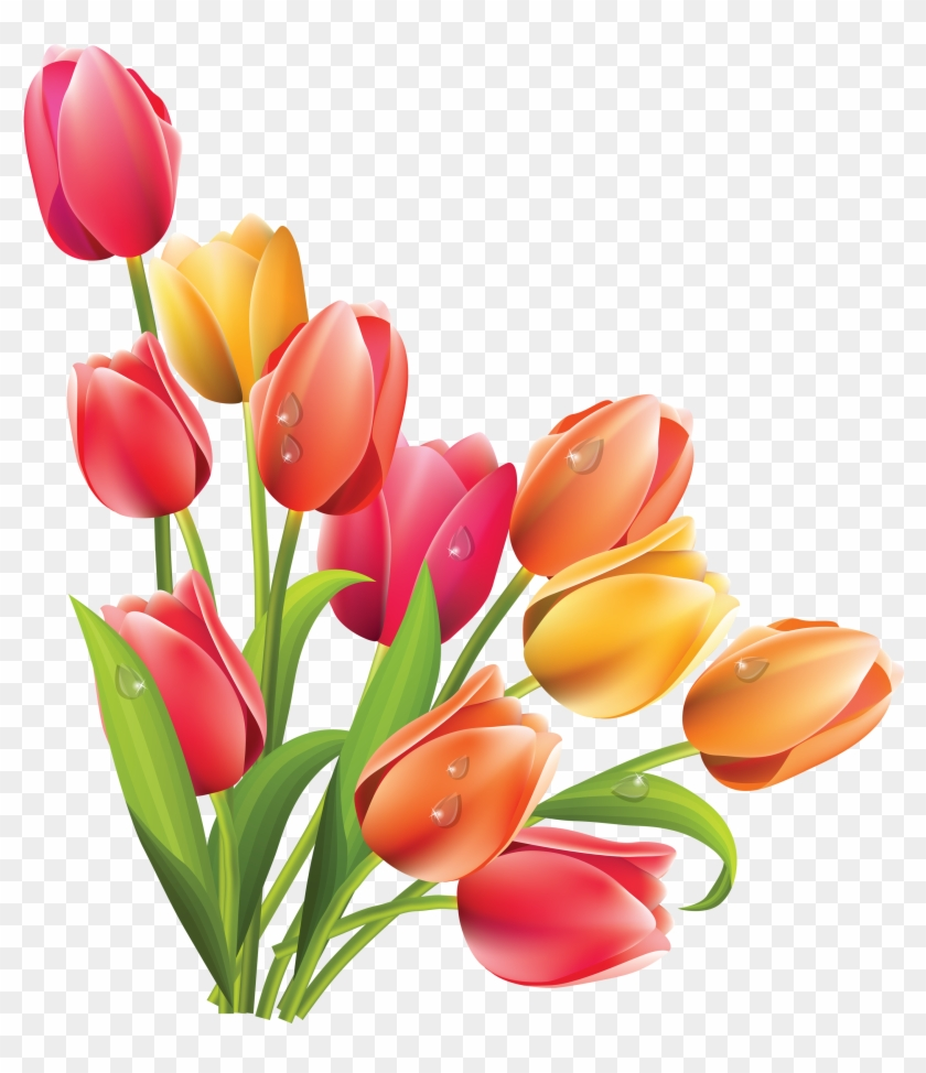 Spring Tulip Vector Easter Flowers Clipart Free Transparent Png