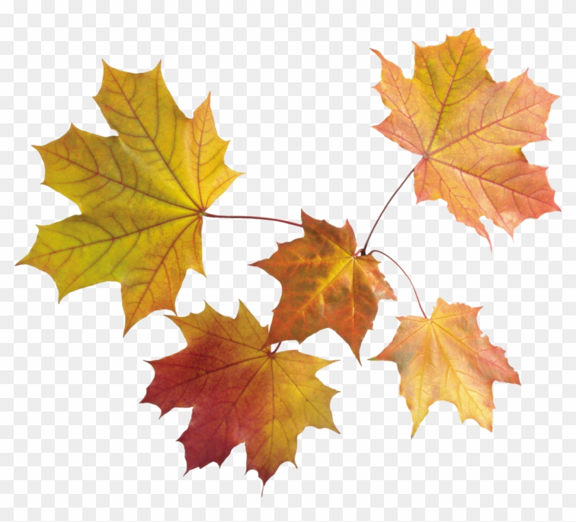 Autumn Png Leaves - Autumn Leaves Transparent Background #236924