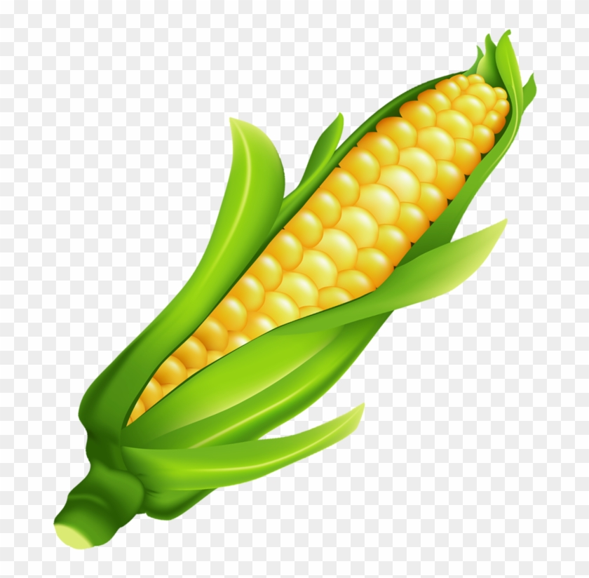 ear of corn clipart free transparent png clipart images
