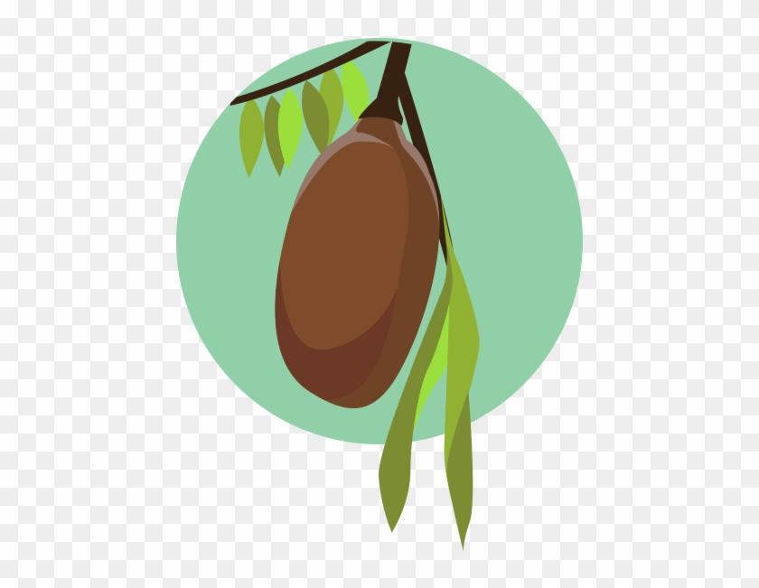 Cupuacu Fruit On Tree - Cupuaçu #237095