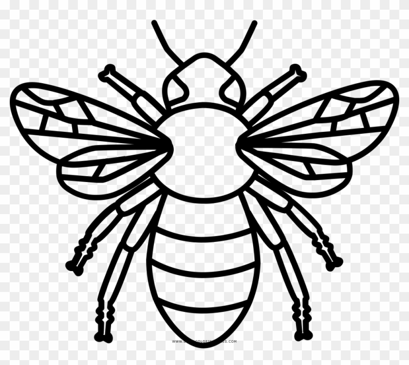 Ultra Coloring Pages Abeja Para Colorear Free