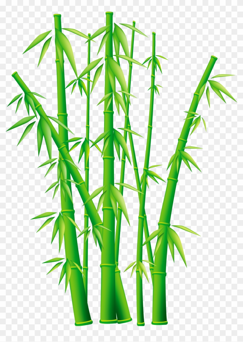 bamboo clip art - bamboo png - free transparent png clipart images download  clipartmax