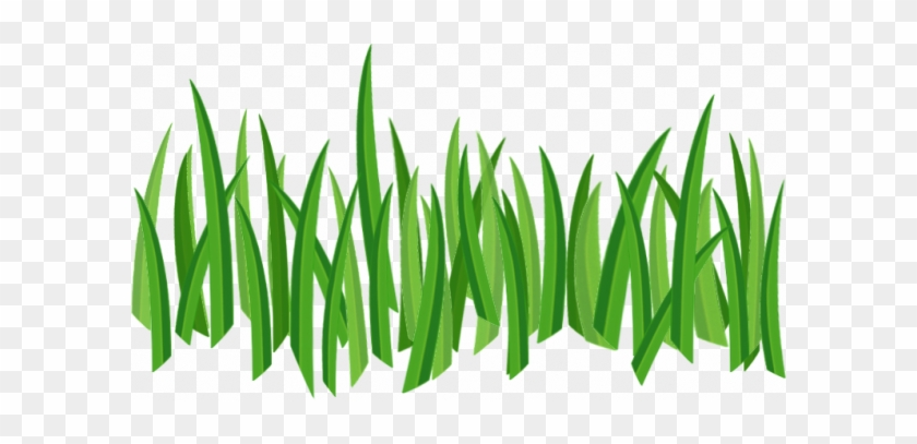 Grass Png Image, Green Picture - Grass Png Texture - Free