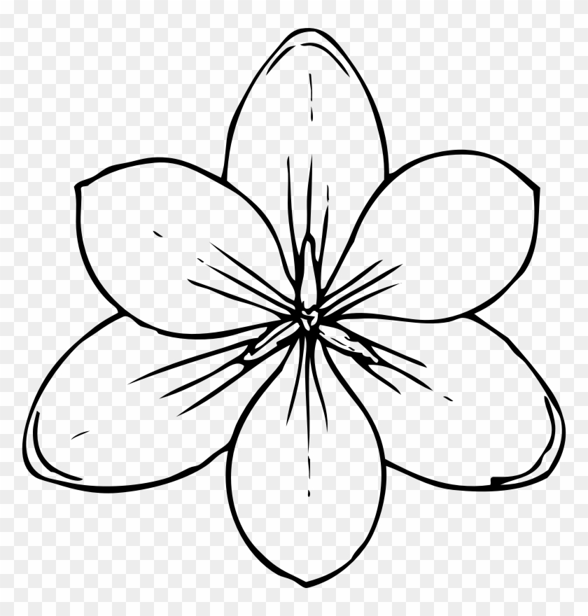 Free Printable Flower Stencil Templates Coloring Pages Of Flowers Free Transparent Png Clipart Images Download