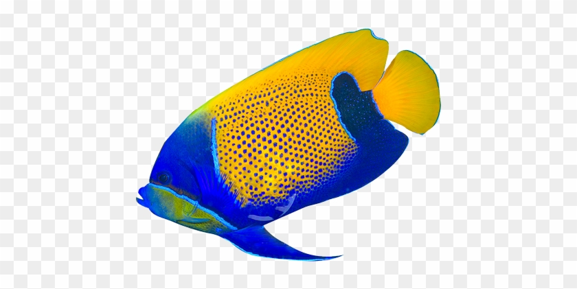 Border Of Tropical Fishes Royalty - Tropical Fish No Background #37319