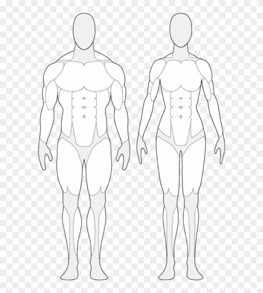 Human Anatomy Outline Human Body Muscle Outline Tendernessco - Human Body Muscle Outline #40160
