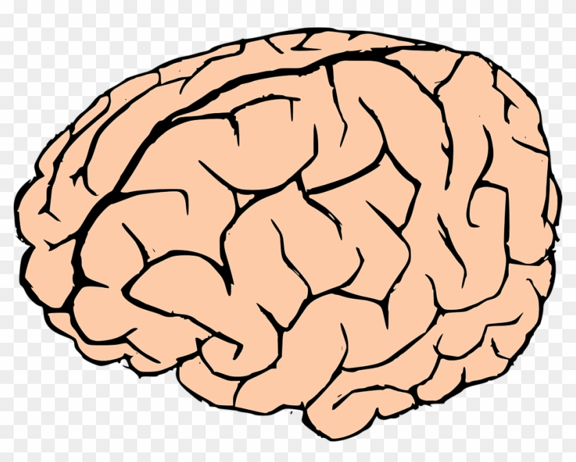 Brain Human Brain Knowledge Anatomy Biology Organ Brain Clipart