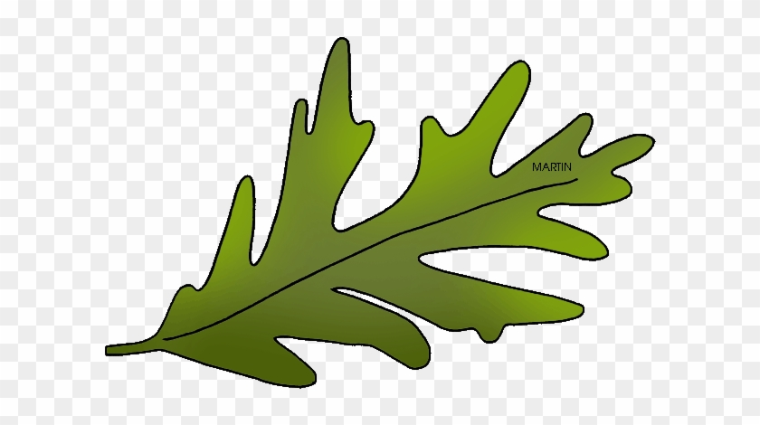 United Clip Art By Phillip Martin, State Tree - Connecticut State Tree Leaf #40528