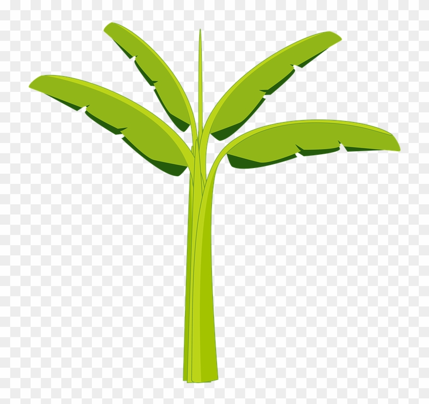 banana tree banana tree plant agriculture botany show da luna bananeira png free transparent png clipart images download show da luna bananeira png