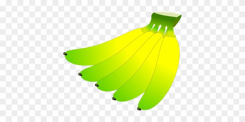 Banana, Fruit, Fresh, Organic, Green - Banana #41544