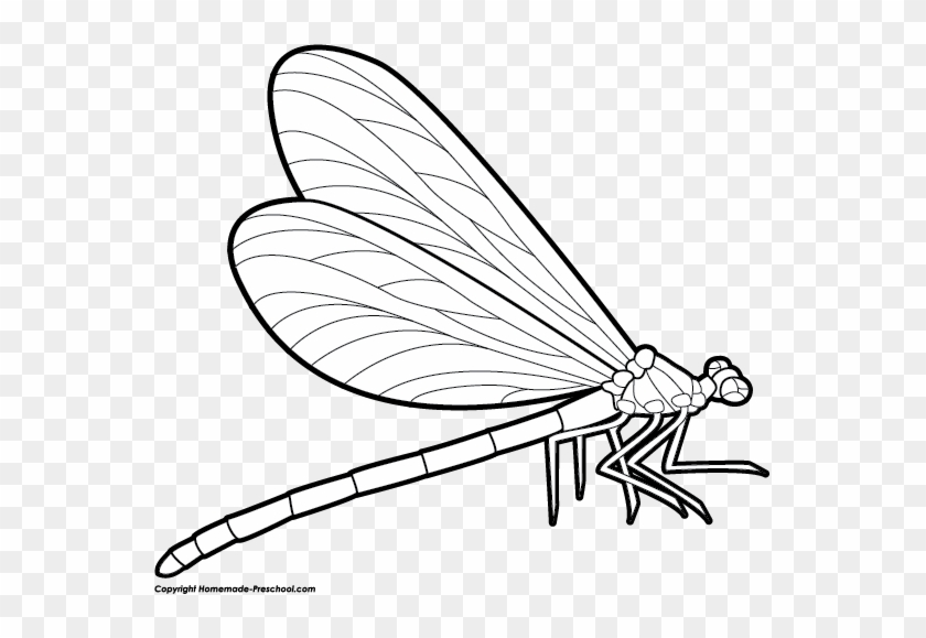 Dragonfly Clipart - Dragonfly Drawing Side View #42063