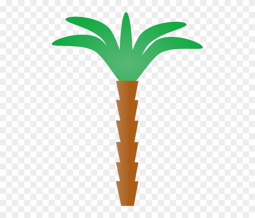 Tree, Cartoon, Plant, Florida, Coconut, Nature - Palm Tree Clip Art #42841