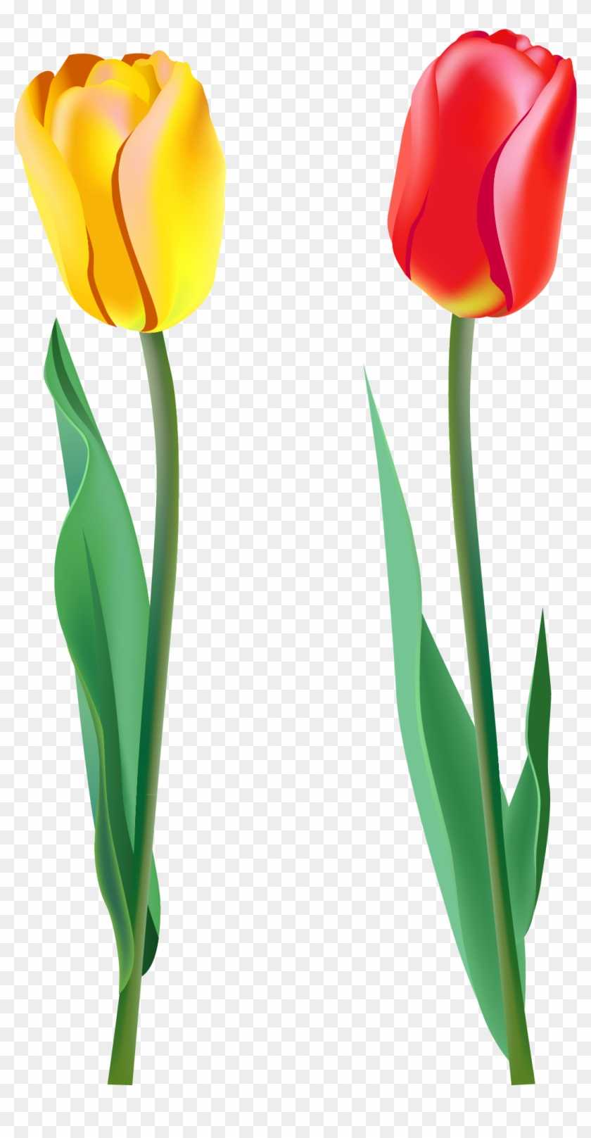 Spring Clipart Pink Tulip Two Flowers Png Free Transparent Png