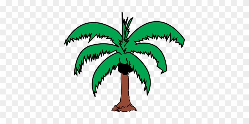 Coconut Palm Plant Tree Coconut Coconut Co - Coconut Tree Leaves Clip Art #43424