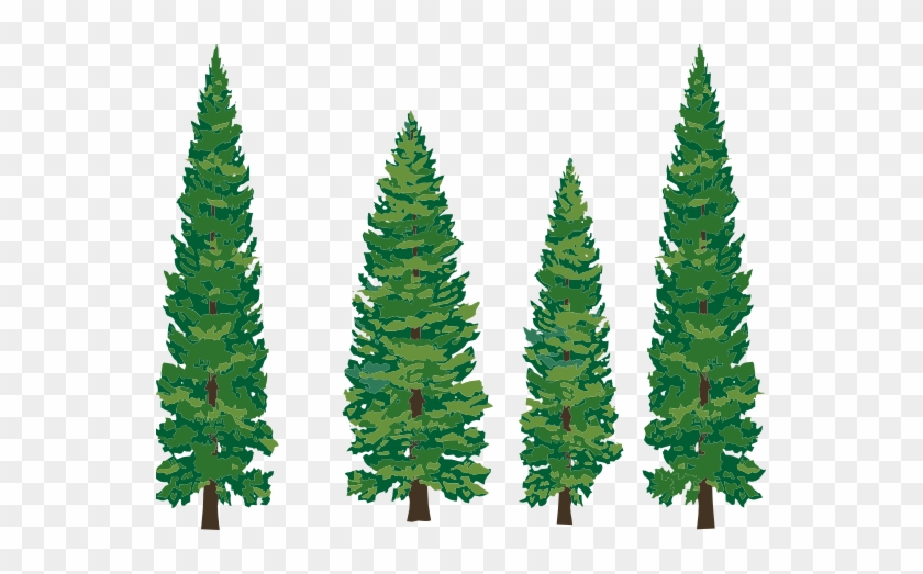 Clipart Info - Pine Tree Clipart Png #43553