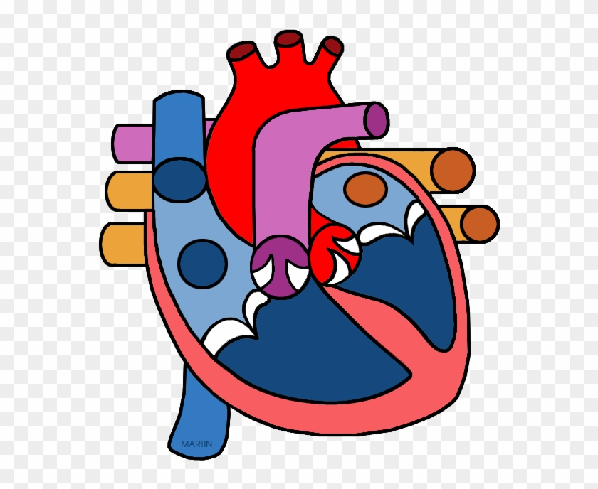 Science Clip Art By Phillip Martin - Heart Diagram No Labels #44206
