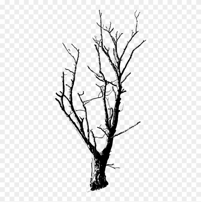 Medium Image - Dead Tree Black And White #44291