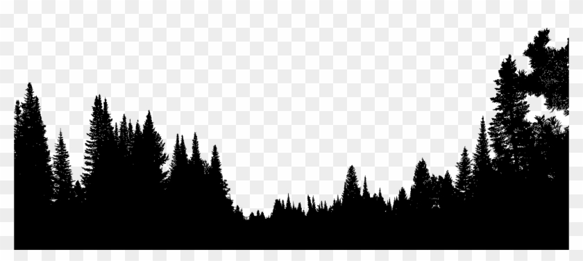 Forest Tree Silhouette - Forest Trees Silhouette Png #1589149