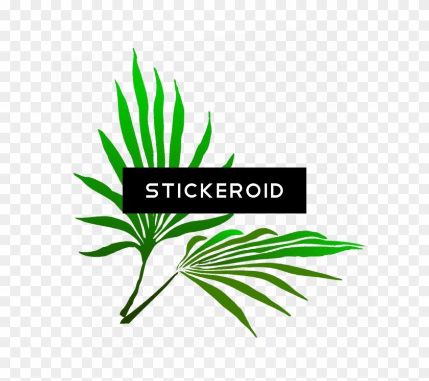 Sukkot Palm Branch - Palm Frond Clip Art #1605303
