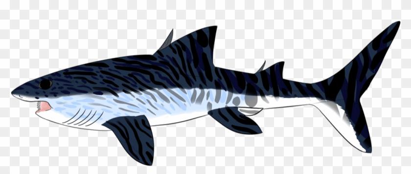 Picture - Bronze Hammerhead Shark #1611789
