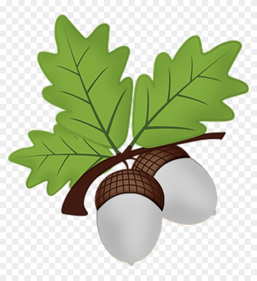 Acorns PNG Clipart | Gallery Yopriceville - High-Quality Images and  Transparent PNG Free Clipart