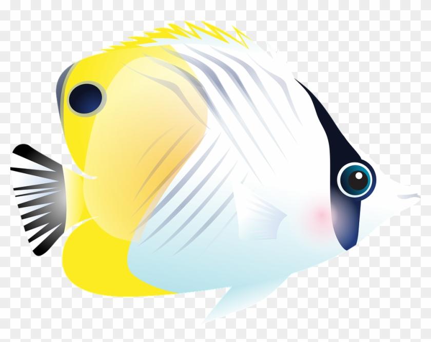 Fish, Tropical Fish, Sea, Exotic Fish, Aquarium - Tropical Fish #1616526