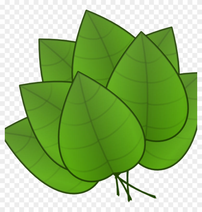 Jungle Leaves Clipart Jungle Leaves Clipart Free Jungle - Parts Of The Plants Leaf #1624340