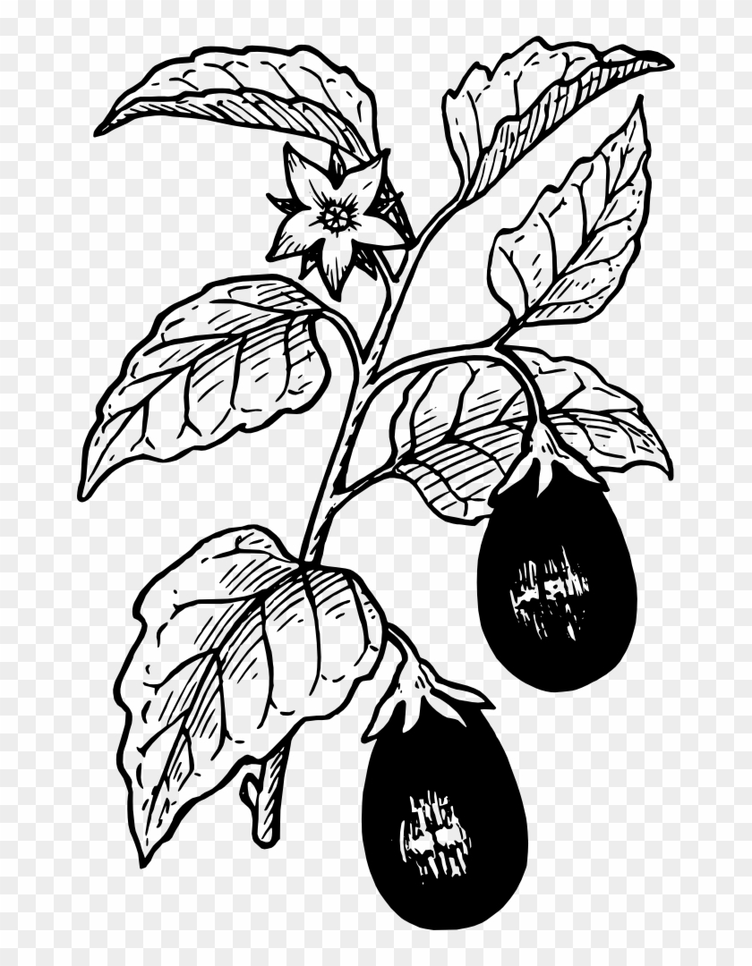 Onlinelabels Clip Art - Eggplant Plant Black And White #253340