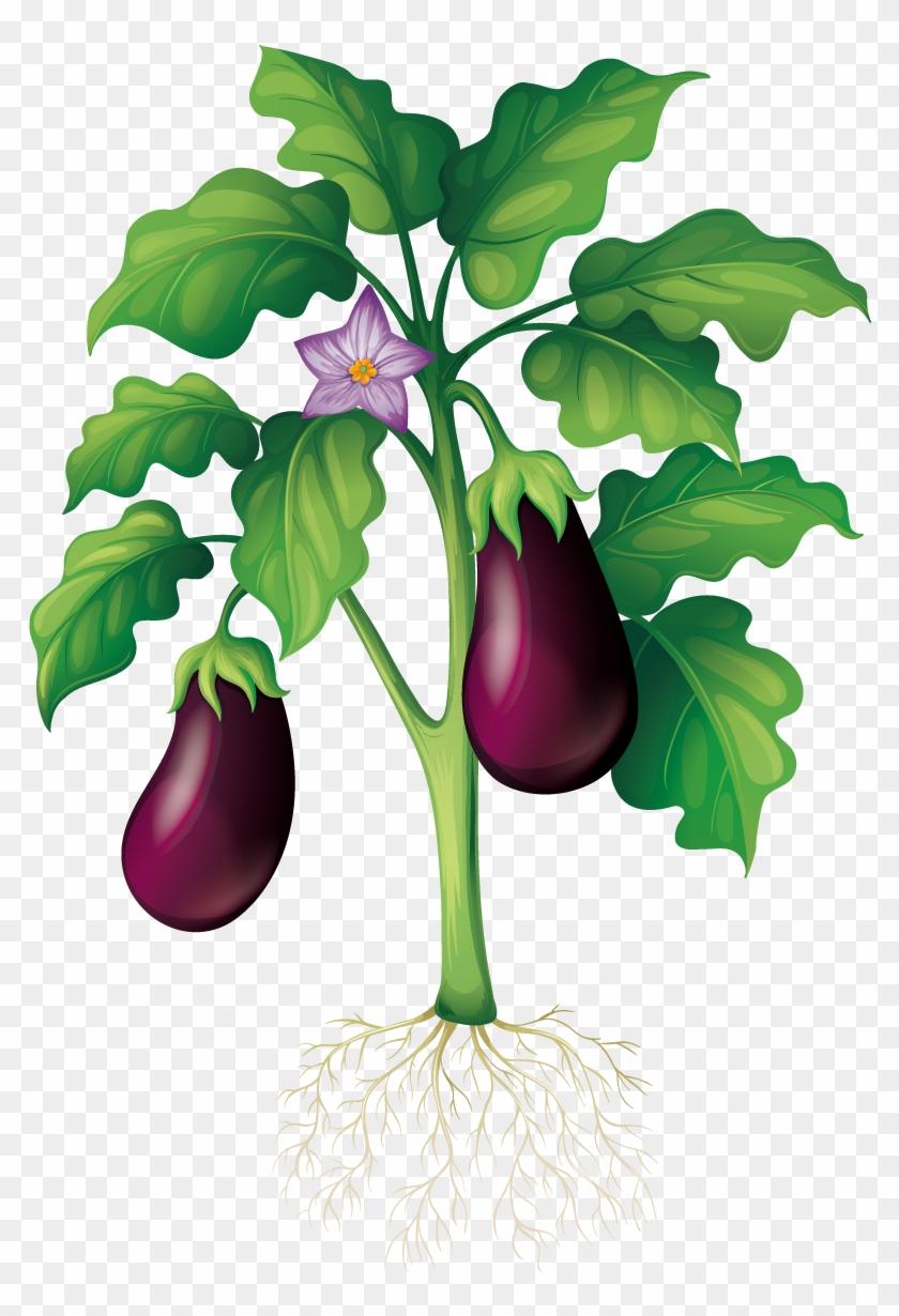Plant Garden Clip Art - Eggplant Tree Vector #253389
