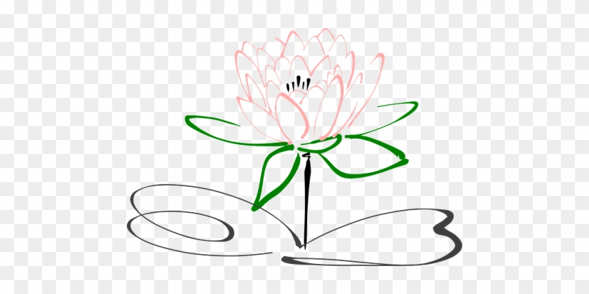 Lotus Flower Blossom Plant Nature Pink Blo Drawing Black And White