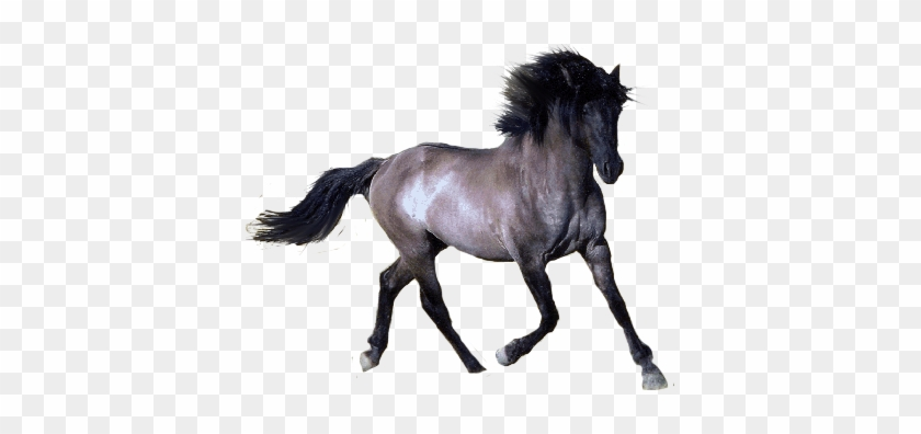 Welcome To Our Hand Picked No Horseplay Clipart Page - Horse With Transparent Background #1632292