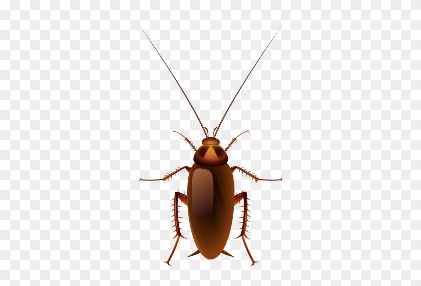 Cockroach Cartoon #1633170