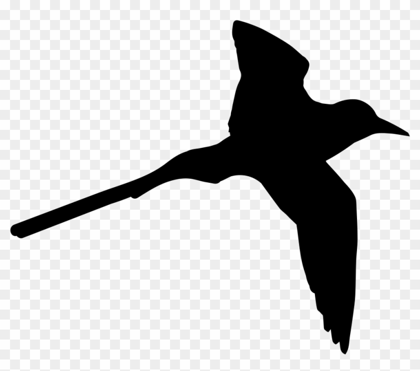 Tropical Bird Shape Of Long Tail Comments - Bird Shape #1635262