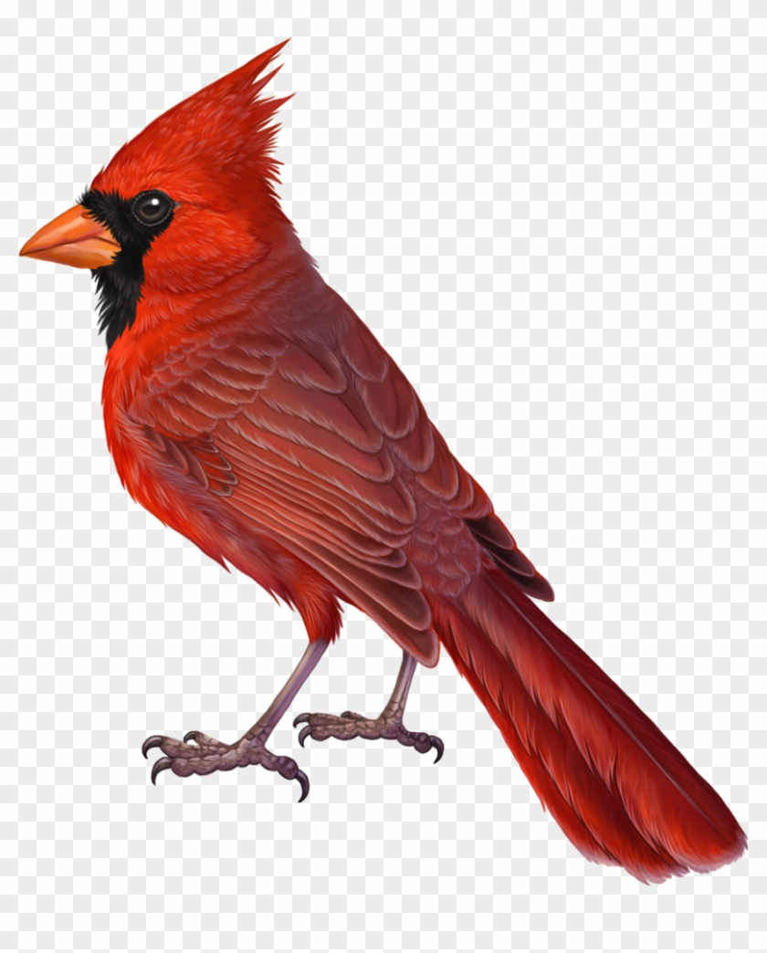 Free Cardinal Winter Cliparts, Download Free Clip Art, Free Clip Art on  Clipart Library