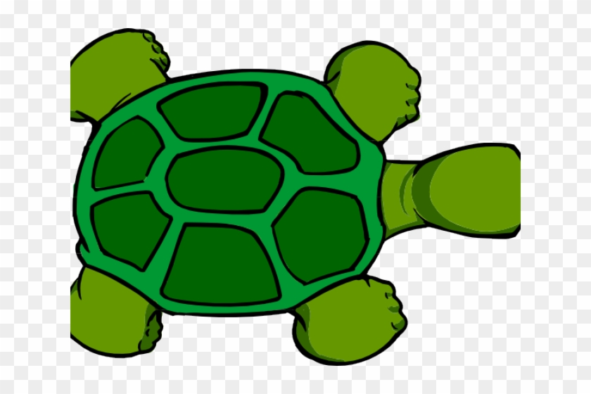 Tortoise Clipart Top View Cartoon Turtle Shell Free