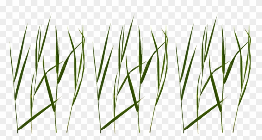 Free Png Download Grass Blade Texture Png Images Background - Grass Blade Texture Png #1668630