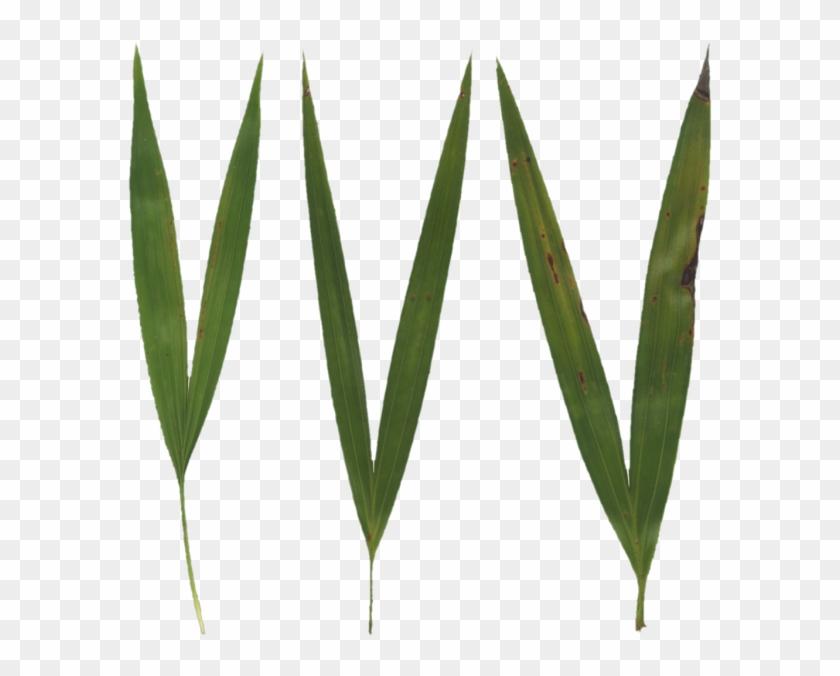 600 X 600 5 - Grass Blade Texture #1668634