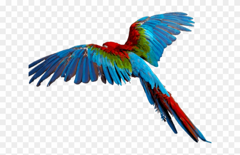 Parrot Bird Flight Macaw Clip Art - Birds On Flyings Clip Art - Free  Transparent PNG Clipart Images Download