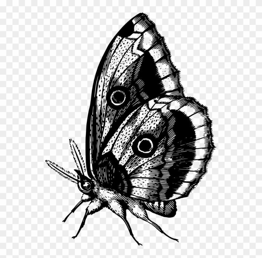 Monarch Butterfly Brush-footed Butterflies Insect Animal - Png Butterfly Hd #1700884