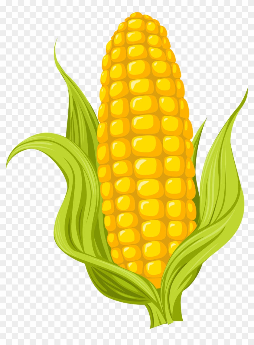 Maize Drawing Photography Illustration - Sweet Corn ...